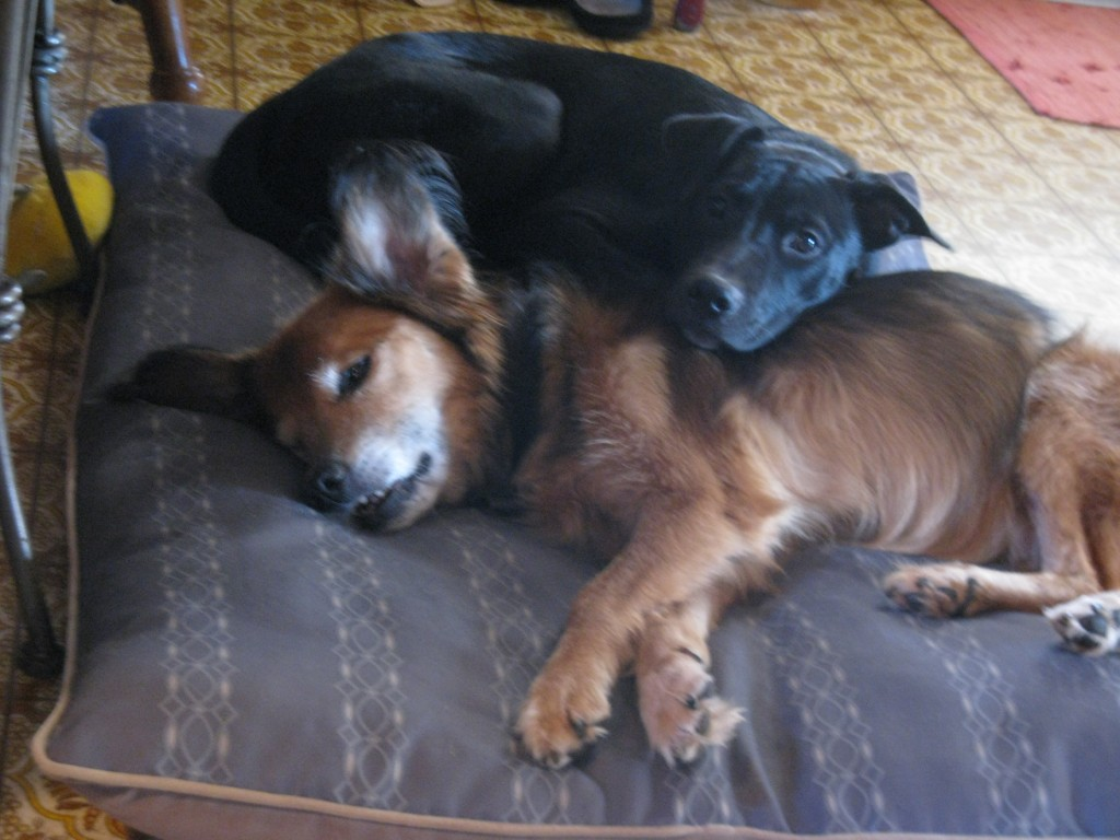 My dogs snuggle together!