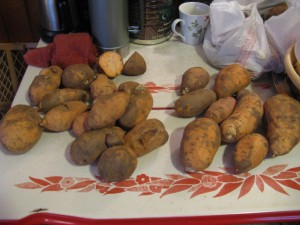 the sweet potatoes i used when making my triple batch
