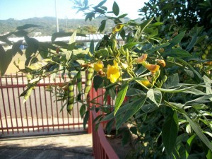 Pigeon Pea Food Forest