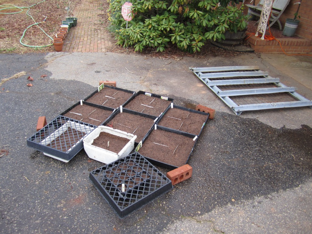 our planted seed trays, taking in the sun and soaking in the water.