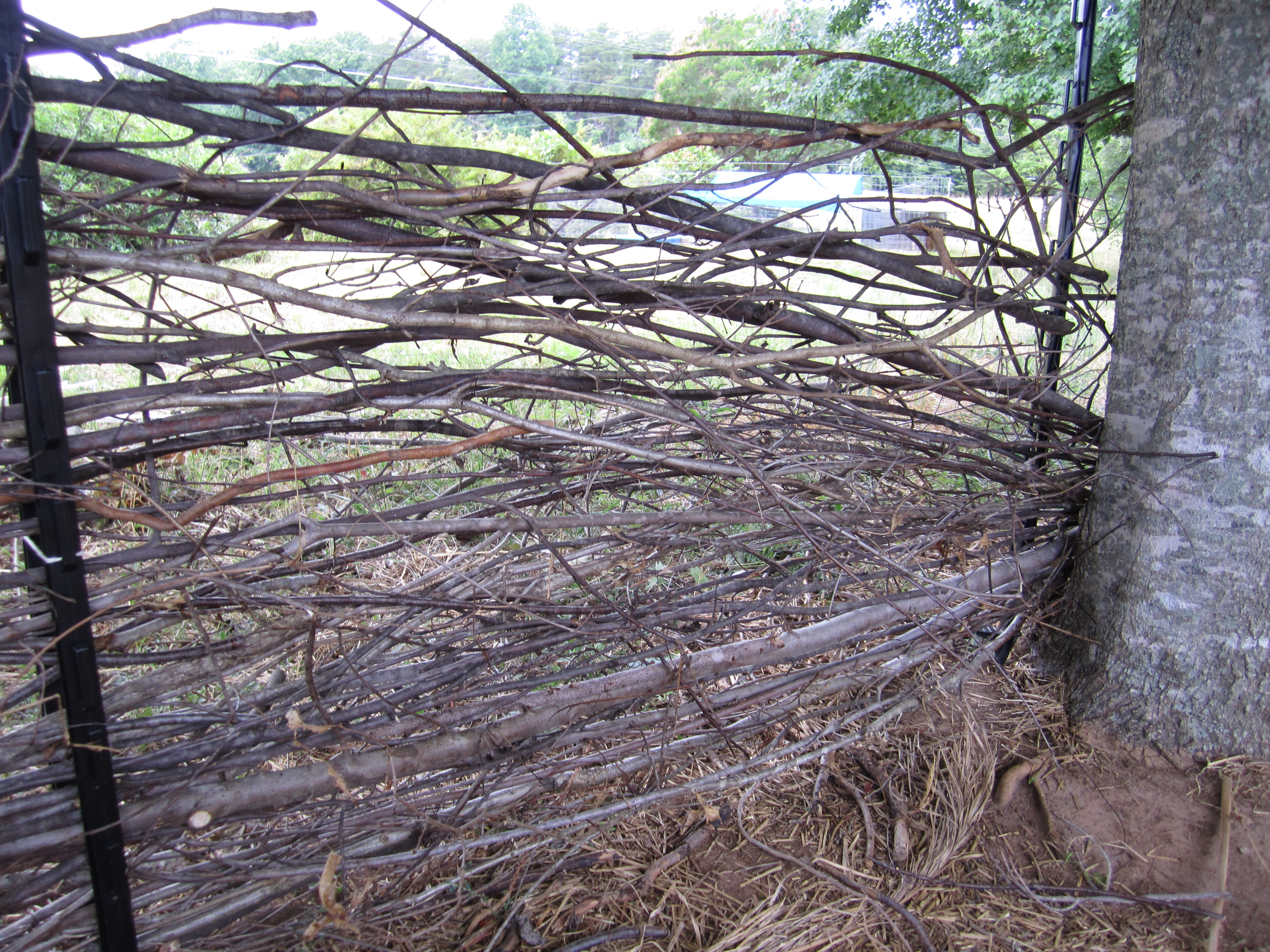 Easy Fun And Attractive Wattle Fencing Our Ochre Way