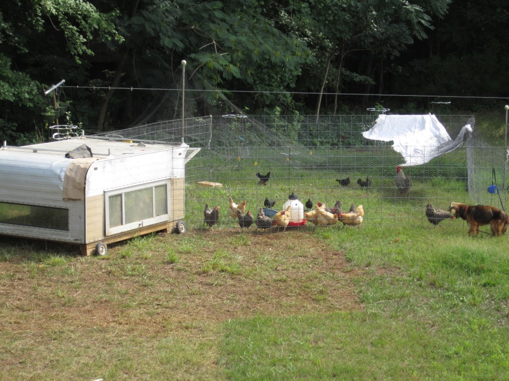 mobile chicken paddock system