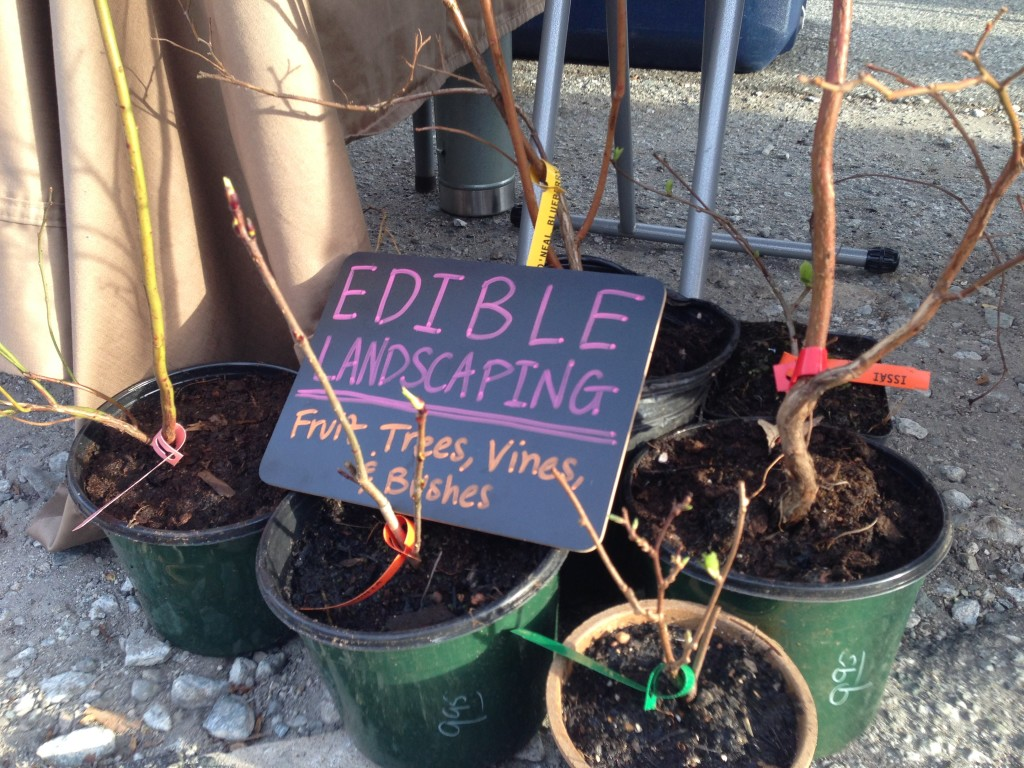 Edible landscaping NC